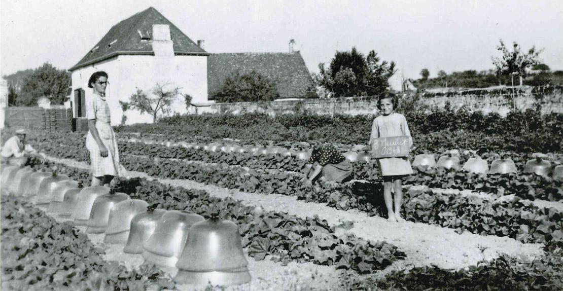La taille des melons le 3 juillet 1943